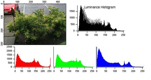 Belajar Teknik Fotografi Menggunakan DSLR Histogram